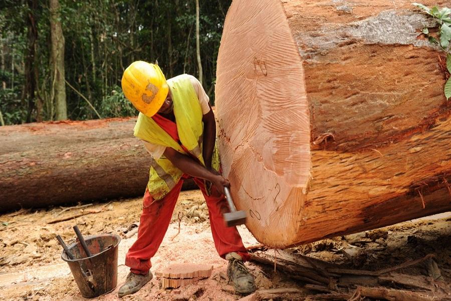 cameroun augmentation des prix du bois camerounais sur le march international. Black Bedroom Furniture Sets. Home Design Ideas