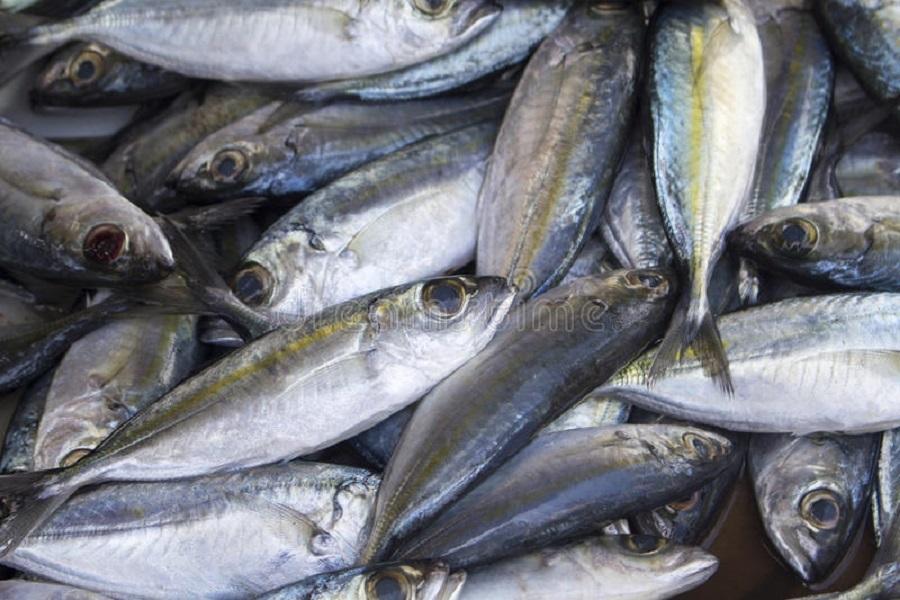 Denrées alimentaires : Congelcam refuse de se plier aux nouveaux tarifs.