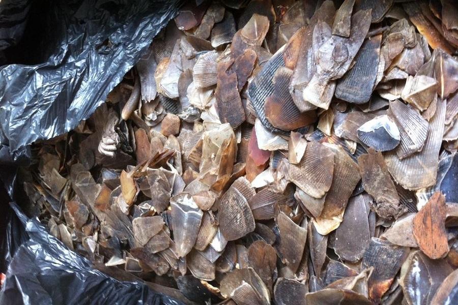 Braconnage :300 kg d'ivoires et 2,5 tonnes d'écailles de pangolin saisis à Douala.