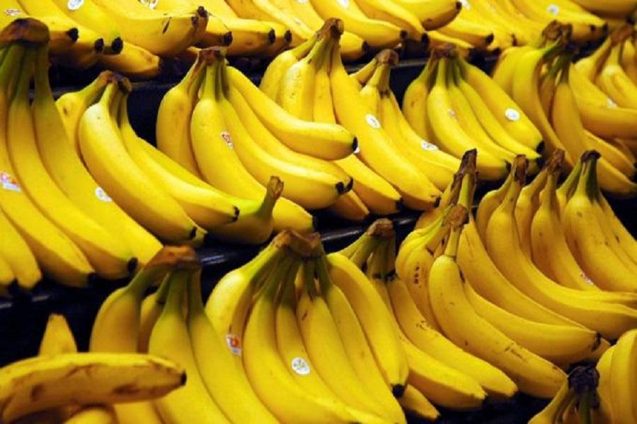 Cameroun-exportation : la banane « made in Cameroon » en deçà