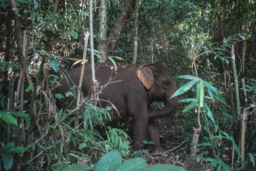 CAMEROUN-AGRICULTURE : Des champs volent en fumée du fait d'une horde d'éléphants dans l'extrême nord.