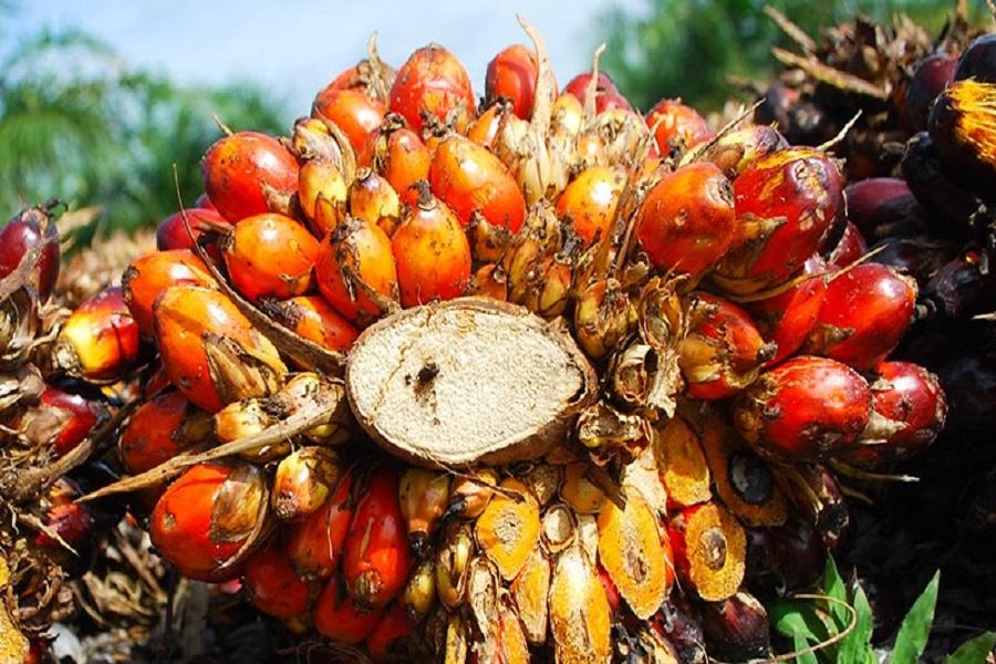 CAMEROUN-CRISE ANGLOPHONE : l'entreprise pamol plantations plc annonce des pertes colossales
