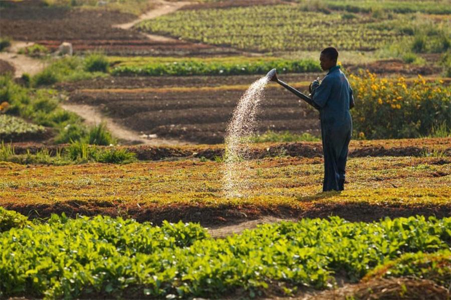 Cameroun-agriculture : les experts aux trousses de la jeunesse pour le développement économique.