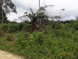 Cameroun-question foncière : la présence chinoise crée le débat